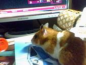 家鼠們:IMG0008A