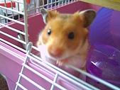 家鼠們:爬出來