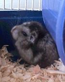 家鼠們:IMG0170A