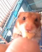家鼠們:IMG0173A