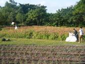 大屯花卉農場20121104:大屯花卉農場 042.jpg