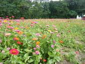 大屯花卉農場20121104:大屯花卉農場 022.jpg