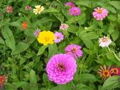 大屯花卉農場20121104:大屯花卉農場 023.jpg
