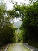130423溪頭杉林溪:DSCN6980.JPG