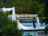 大屯花卉農場20121104:大屯花卉農場 036.jpg