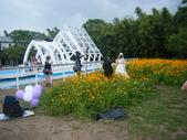 大屯花卉農場20121104:大屯花卉農場 037.jpg