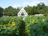大屯花卉農場20121104:大屯花卉農場 038.jpg