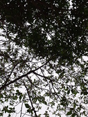 自由馨正飛禽走獸:2010年的照片 018.jpg