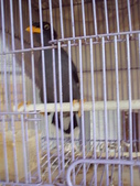 自由馨正飛禽走獸:2010年的照片 024.jpg