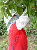 自由馨正種植專區:20110821採果天倫樂 028.jpg