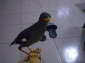自由馨正飛禽走獸:自由馨正20081001 043.jpg