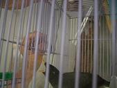 自由馨正飛禽走獸:自由馨正寵物 006.jpg