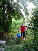 自由馨正種植專區:20110821採果天倫樂 021.jpg