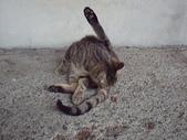 自由馨正飛禽走獸:2010年的照片 023.jpg