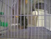 自由馨正飛禽走獸:自由馨正寵物 038.jpg
