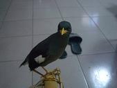 自由馨正飛禽走獸:自由馨正20081001 045.jpg