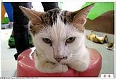 我的貓貓日記:IMG_1781a.jpg
