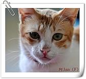 我的貓貓日記:DSC_0695阿Jan.jpg