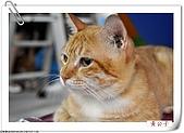 我的貓貓日記:DSC_5805a.jpg