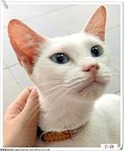 我的貓貓日記:IMG_1734a.jpg