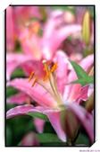 2011年球卉花展:nEO_IMG_DSC_3864.jpg