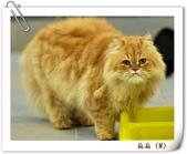 我的貓貓日記:DSC_0634扁扁.jpg