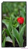 2011年球卉花展:nEO_IMG_DSC_3859.jpg