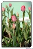 2011年球卉花展:nEO_IMG_DSC_3677.jpg