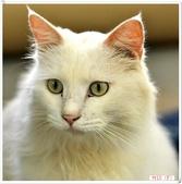 我的貓貓日記:DSC_0519Lu.jpg