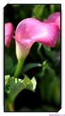 2011年球卉花展:nEO_IMG_DSC_3821.jpg