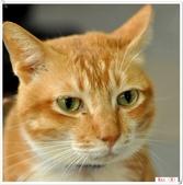 我的貓貓日記:DSC_0515Max.jpg
