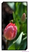 2011年球卉花展:nEO_IMG_DSC_3691.jpg