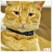 我的貓貓日記:DSC_0476教主.jpg