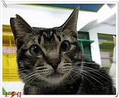 我的貓貓日記:IMG_2878a.jpg