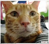我的貓貓日記:IMG_1737a.jpg