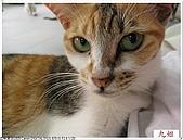 我的貓貓日記:IMG_1747.jpg