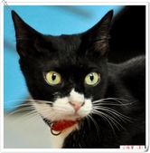我的貓貓日記:DSC_0469小路寶.jpg