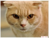 我的貓貓日記:DSC_0552蚊仔.jpg