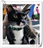 我的貓貓日記:大黑哥.jpg