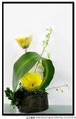 教會之花 (新堂):IMG_1819a.jpg
