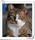 我的貓貓日記:DSC_6774.jpg