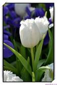 2011年球卉花展:nEO_IMG_DSC_3661.jpg