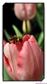 2011年球卉花展:nEO_IMG_DSC_3824.jpg
