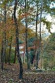 一月的楓、一月的櫻、一月的風景~:DSC_5288-1.jpg