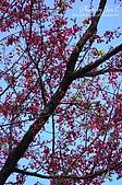 一月的楓、一月的櫻、一月的風景~:DSC_5359-1.jpg