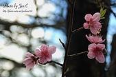 一月的楓、一月的櫻、一月的風景~:DSC_5371-1.jpg