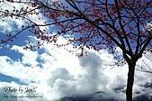 一月的楓、一月的櫻、一月的風景~:DSC_5309-1.jpg
