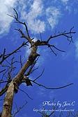 一月的楓、一月的櫻、一月的風景~:DSC_5195-1.jpg