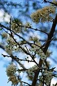 一月的楓、一月的櫻、一月的風景~:DSC_5382-1.jpg