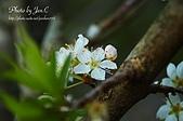 一月的楓、一月的櫻、一月的風景~:DSC_5385-1.jpg